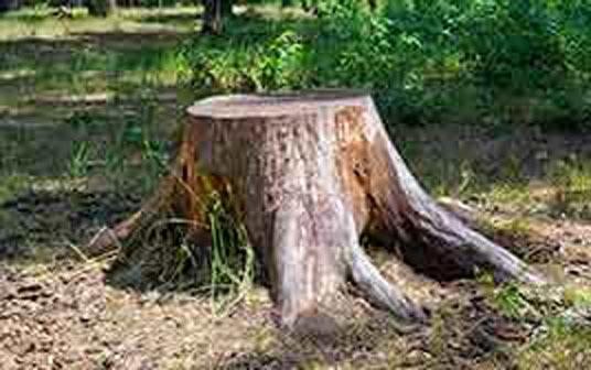 Grand Rapids Stump Removal